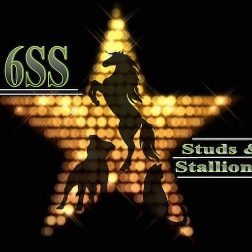 Liikme suurus Stallion